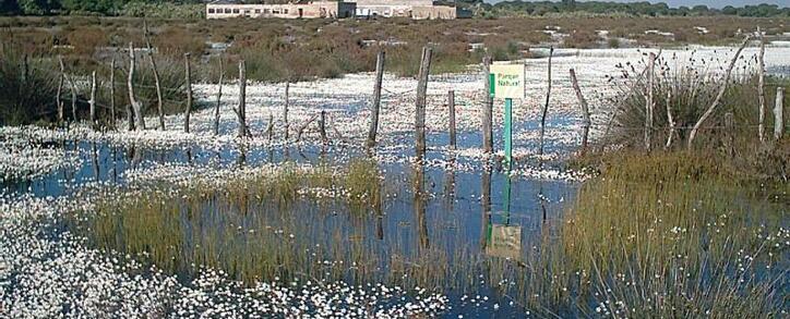 Marais sur la côte de San Fernando