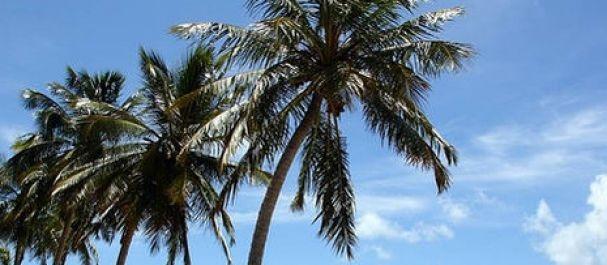 Fotografía de Alagoas: Maceio