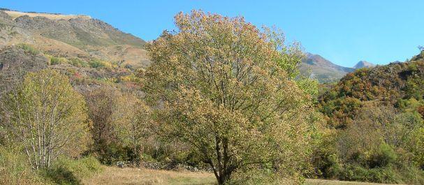Fotografía de Caldes de Boí: Paisaje Valle de Boí
