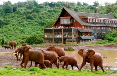 Foto geral - The Ark Lodge