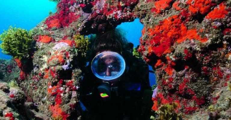 Foto : Submarinismo en la costa de Gran Canaria