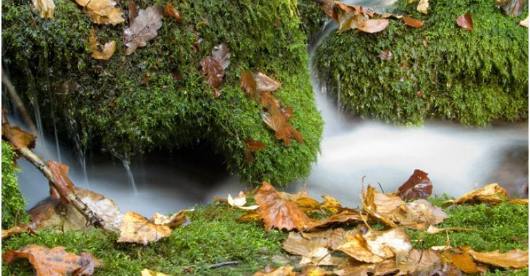 Foto von Cangas de Narcea: Parque Natural Monte de Muniellos