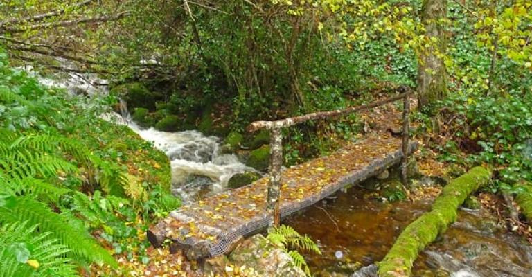 Foto von Cangas de Narcea: Reserva Biológica Parque de Muniellos