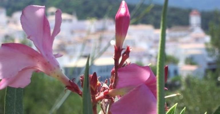 Fotografía de Frigiliana: Pueblos Blancos de Andalucia