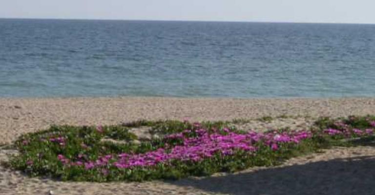 Photo : Flores en la playa de La Antilla