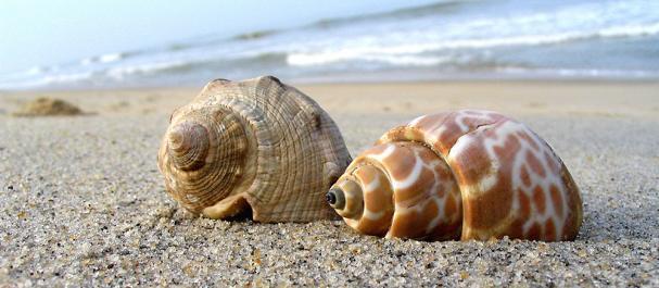 Fotografía de : Pineda de Mar