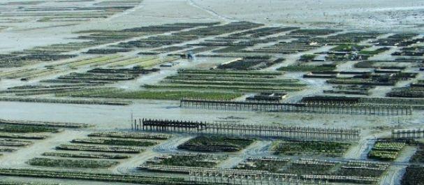 Fotografía de Bretaña: Banco de cultivo de Ostras Cancale