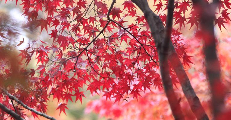 Foto Kyoto: Kyoto