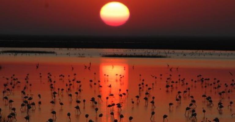 Foto von : Parque Nacional de Doñana